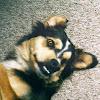 12stringpounddog