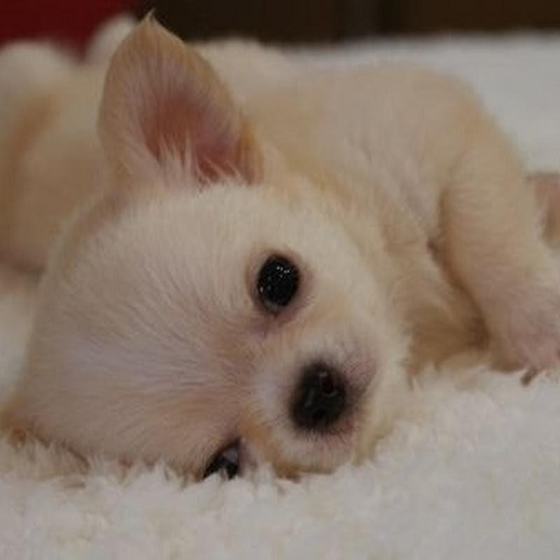 lovingdognet