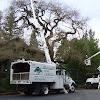 Traverso Tree Service, Inc