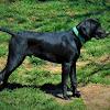 Largemouth Bass Nation