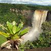 Eerepami Regenwaldstiftung