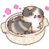 茅ヶ崎猫カフェ「ねこのすみか」