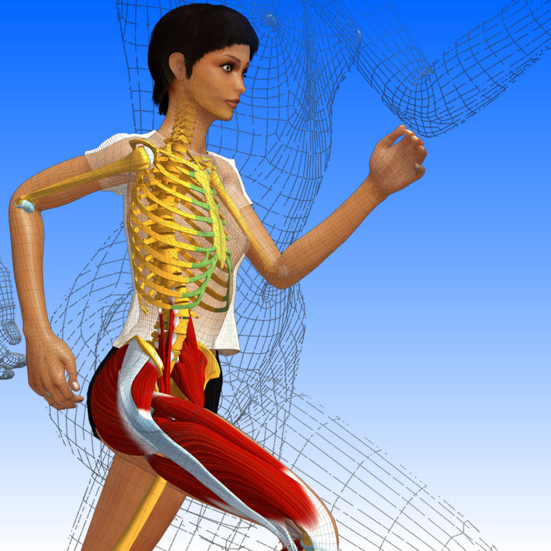 Anatomía 3D Lyon 1 YouTube Stats, Channel Statistics & Analytics