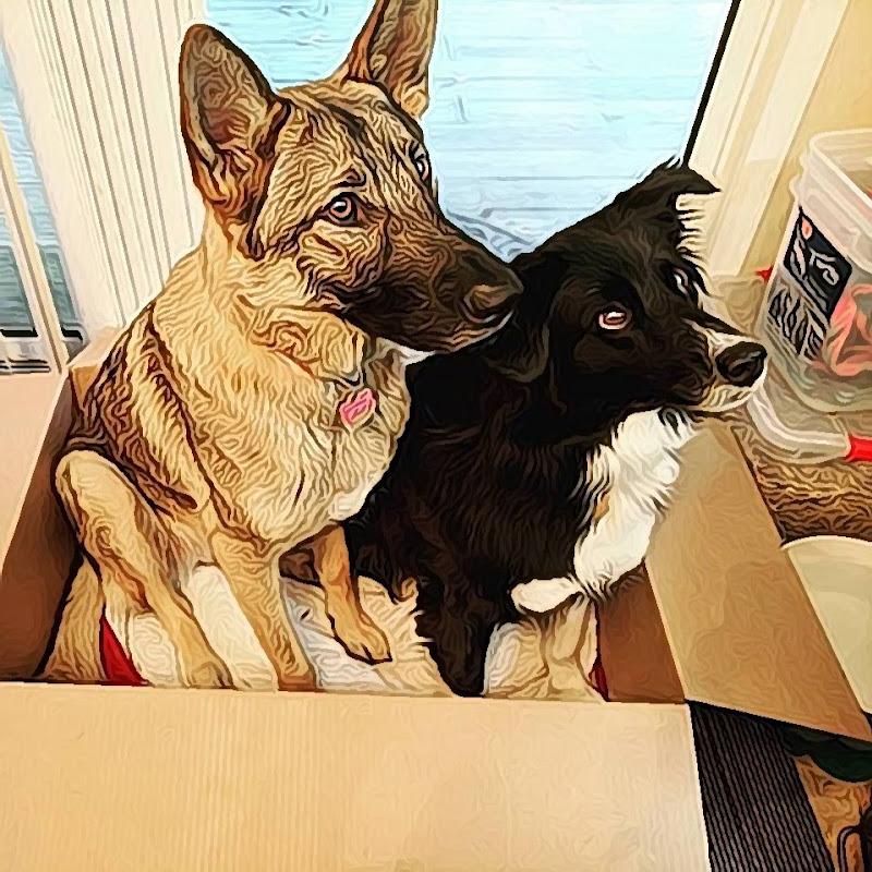DogsLove PetX