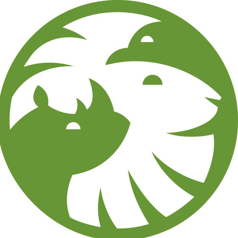 san diego zoo youtube