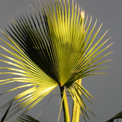 THE TRUTH DENIED