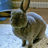 BunnyWorldFoundation