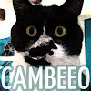 cambeeo.com