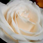 White Rose Guidance