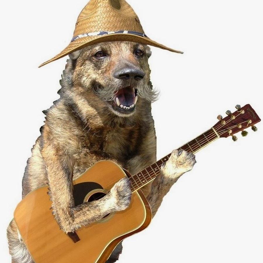 воробей с гитарой картинки покупка