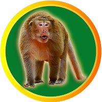 The Monkey Drama