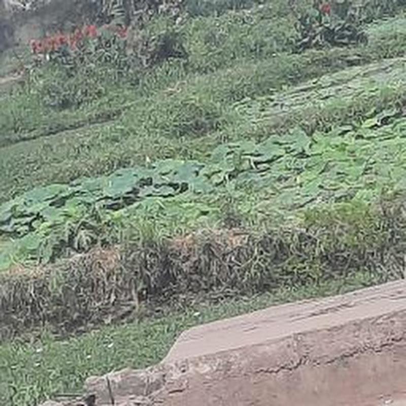 Hunter Rahul (hunter-rahul)