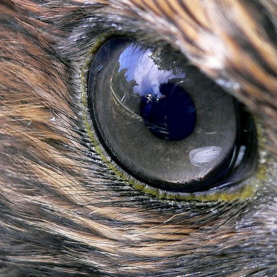 Картинки орлиный глаз