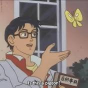 PigeonLyfe