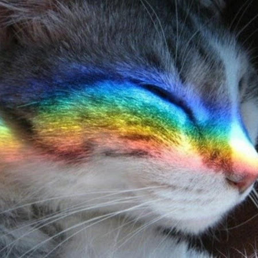 фото коты с радугой на лице родила него дочь