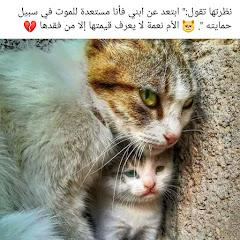 محمد احمد اسماعيل