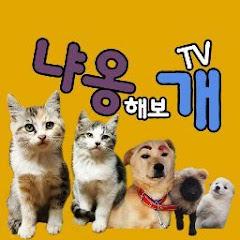 냐옹해보개TV