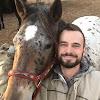 Pferde Hoschi