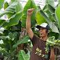 バナナ園TV 〜農業からの健康・子育て・自然農革命〜
