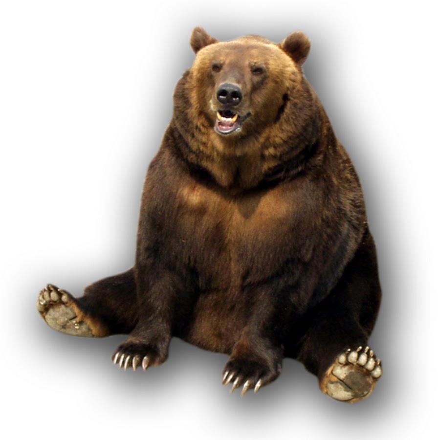 Медведь растровая картинка