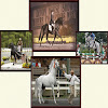 Five Phases Farm Horses For Sale
