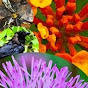 InvasiveSpeciesZA - @InvasiveSpeciesZA - Youtube