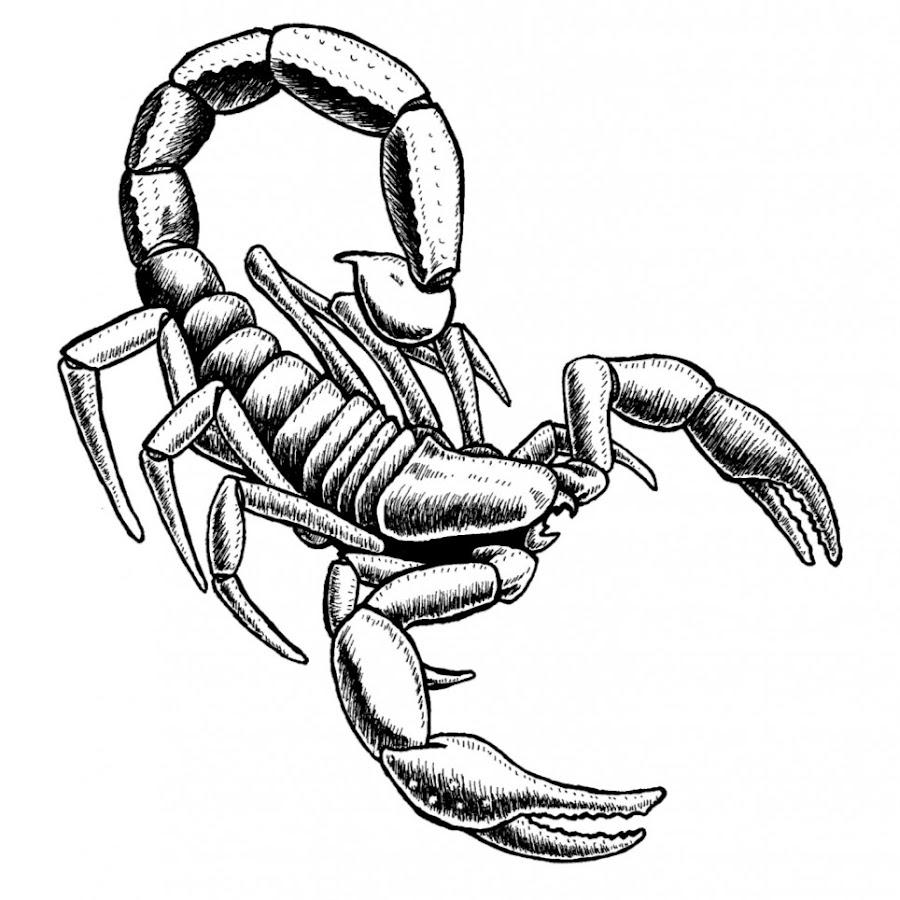 Картинки скорпиона рисунки