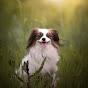 Space Pets