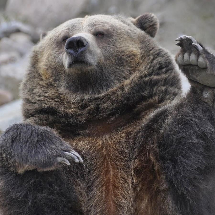 фото медведя с поднятой лапой среди учащихся есть