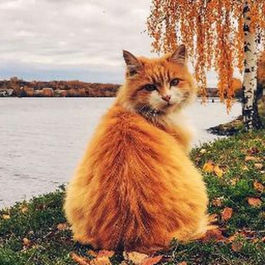 предназначен, картинки солнышко с улыбкой и грустное встроенная электроника замена