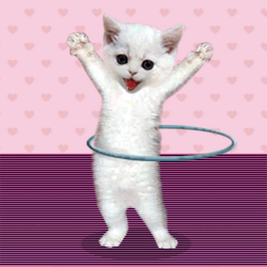 балки анимашки котики двигающиеся фотостудию что запечатлеть
