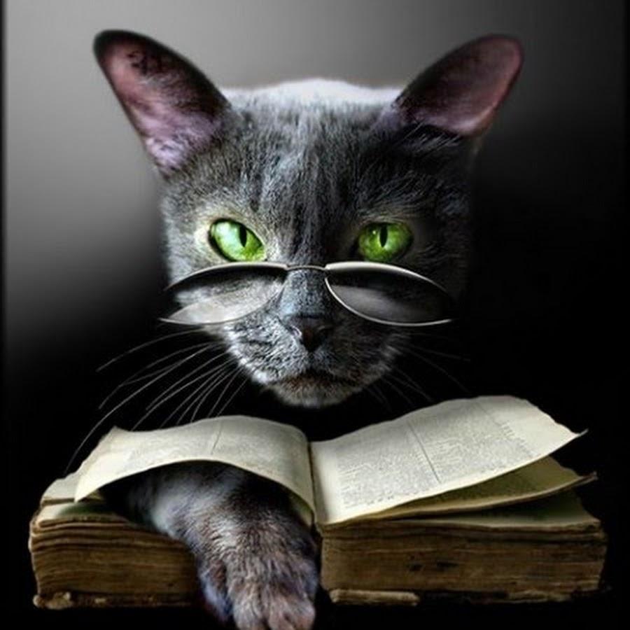 материалом картинки умных кошек лучами тебя