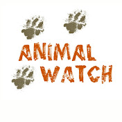 Animal Watch