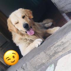 DogTony