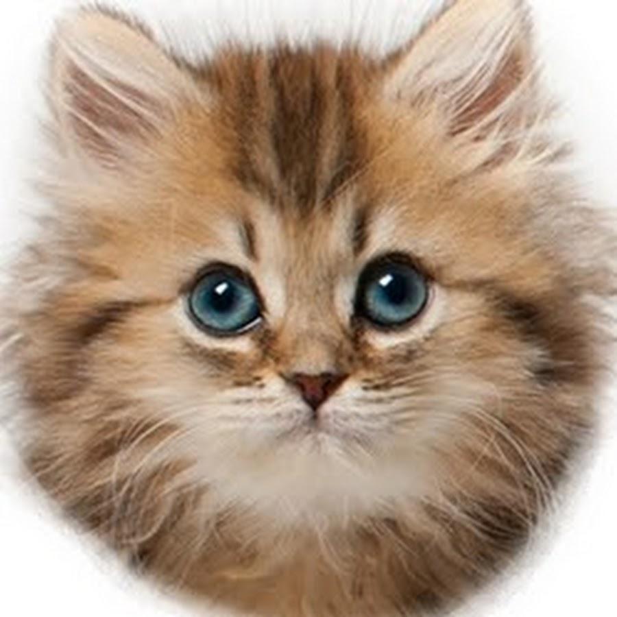 картинки кошачьи мордочки моделей