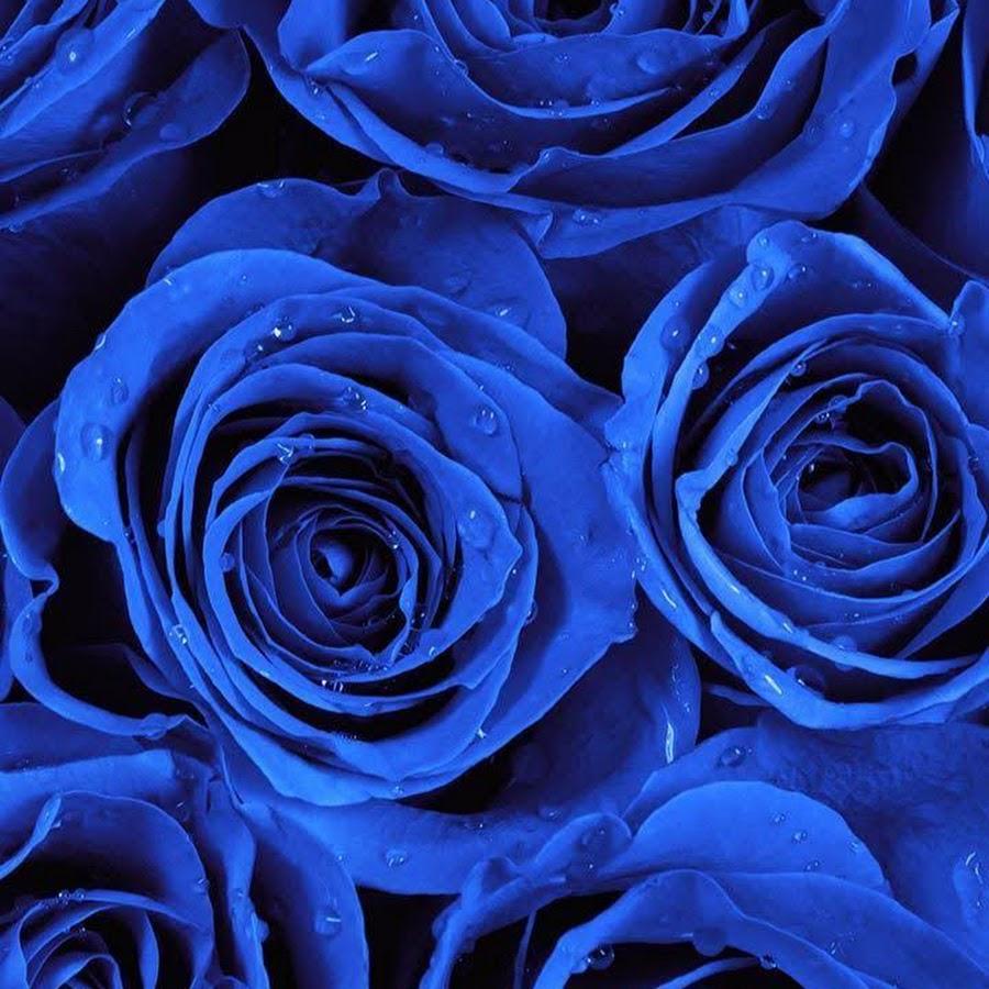 Розы синие картинка