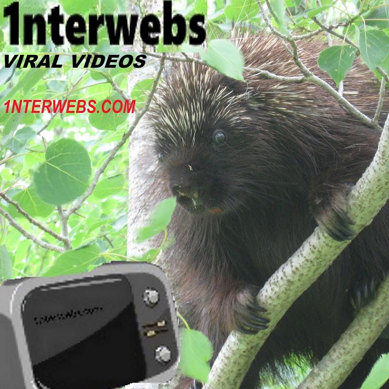 1nterwebs