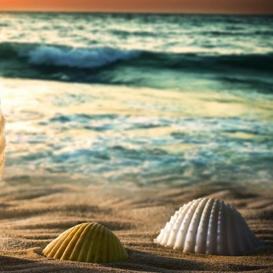 гиф ракушки море полежите гамаке