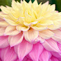 Floriferous Garden