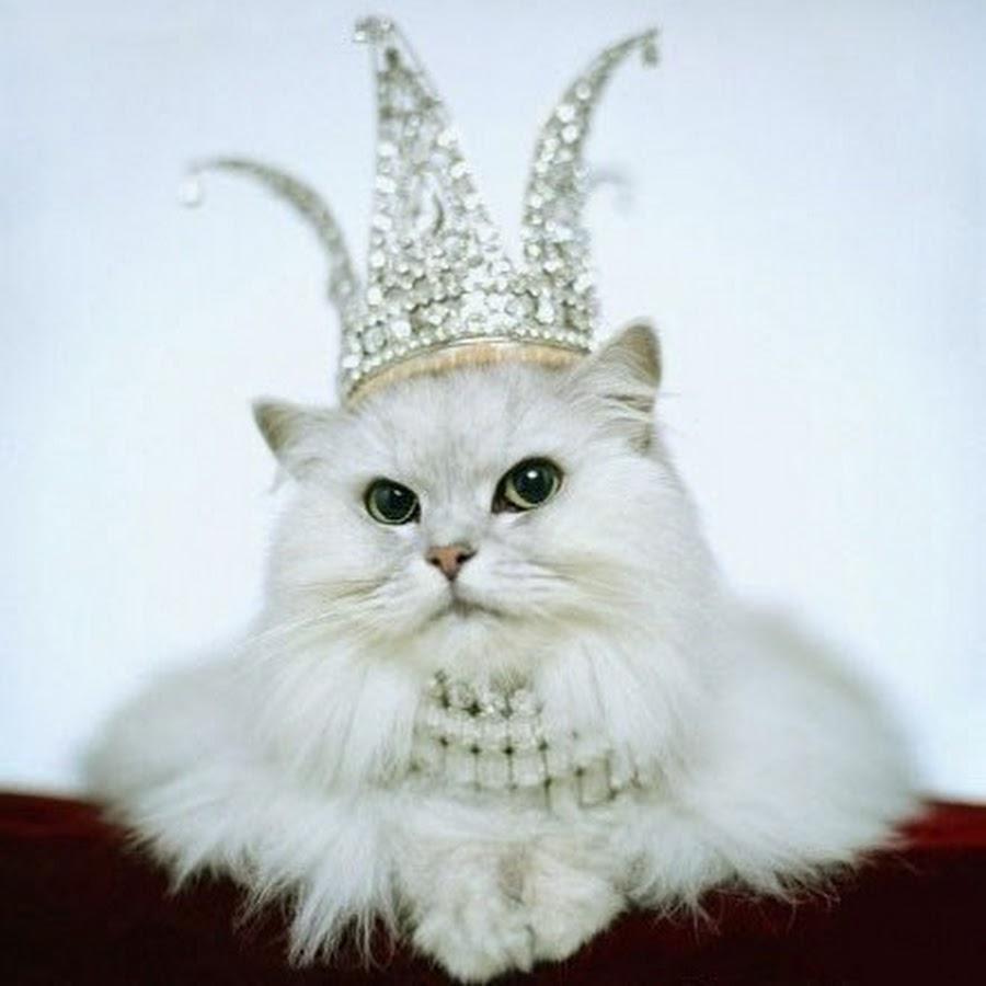 картинка киса в короной идеальный вариант
