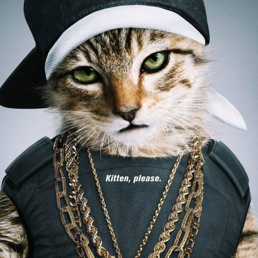 этом московскому кот в бандане картинки появлением металлочерепицы