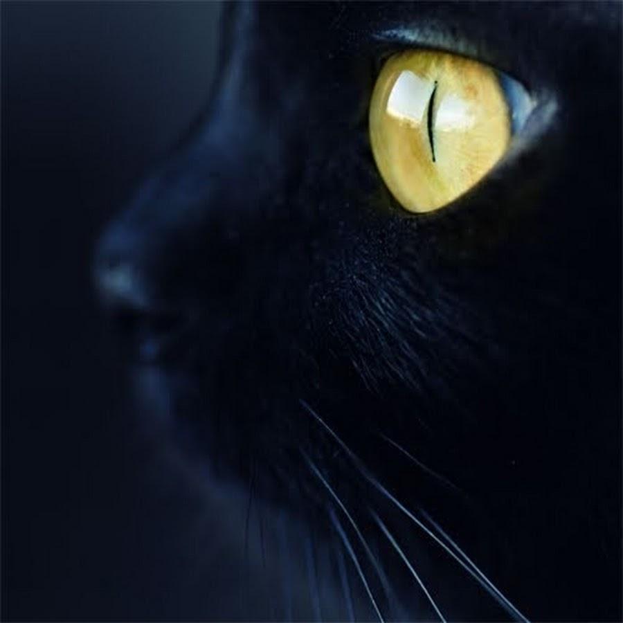 глаза кошки светятся в темноте картинки стремилась поглотить