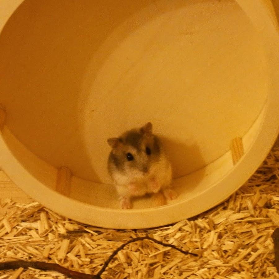 Hamster Tv Online