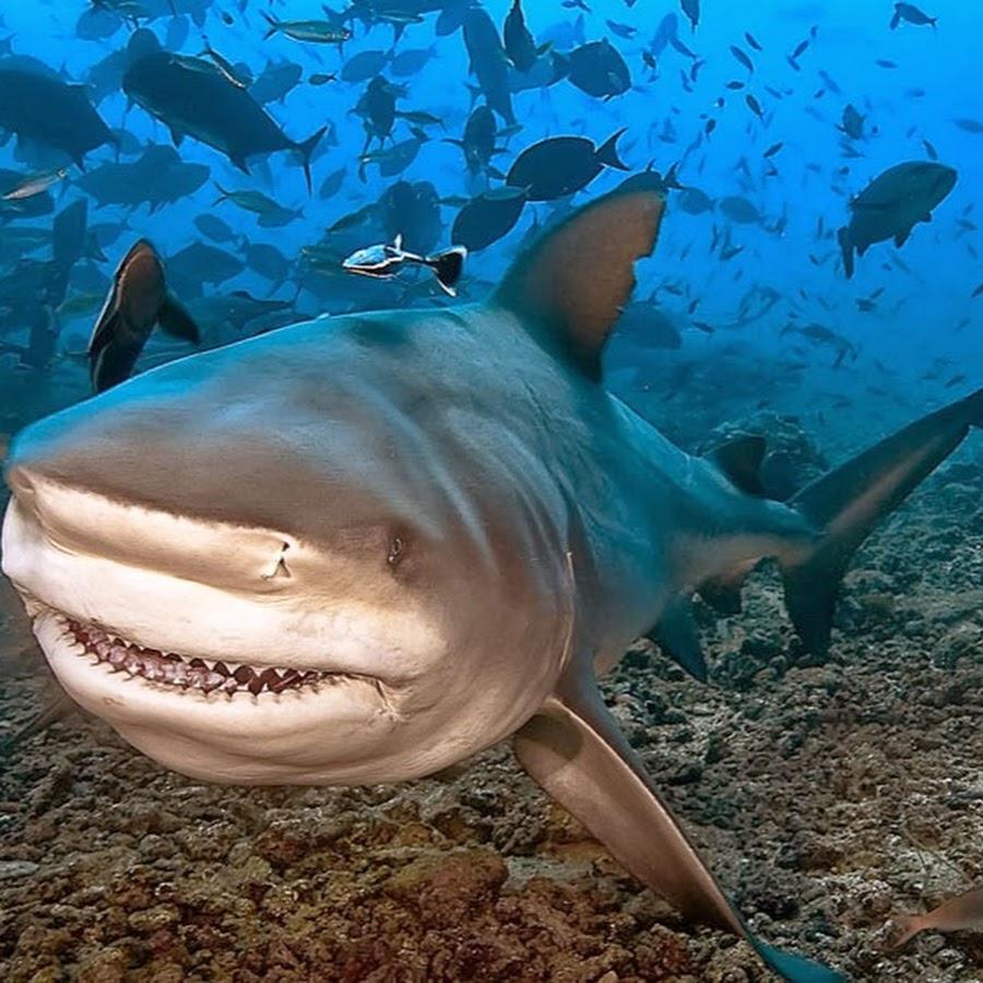 при котором фото разных акул получил