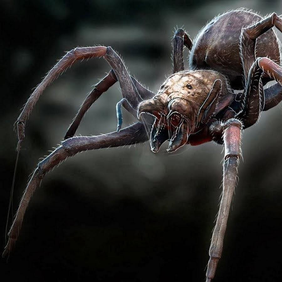 паук и паучиха картинки дате месте