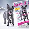 YOUR DOG Magazin
