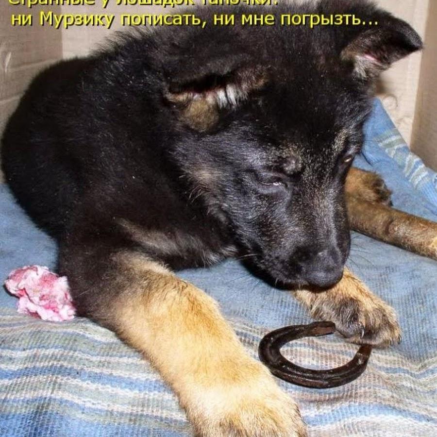 Ржачные приколы картинки с надписями животные