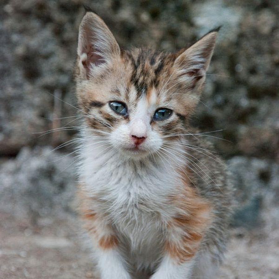 Картинки котенок худой