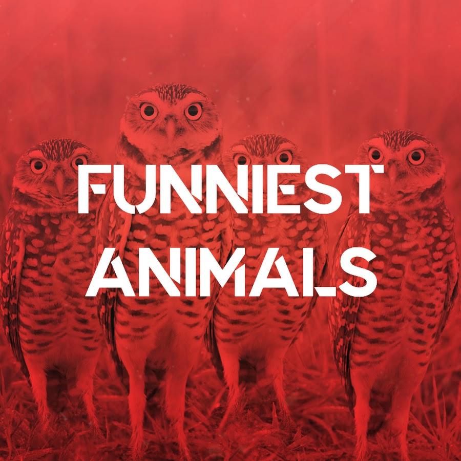 Funniest Animals