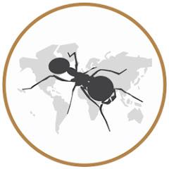 Mierenboerderij